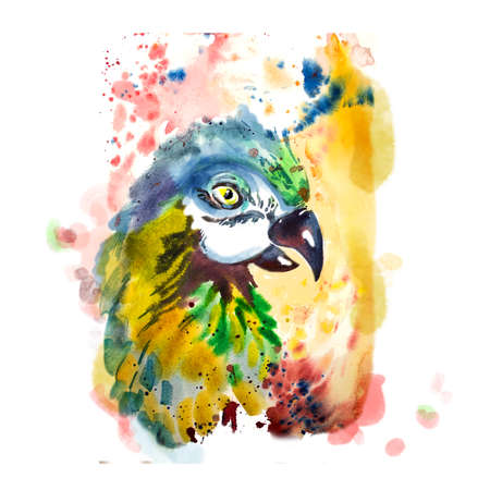 ara: Hand drawn parrot head. Portrait of macaw watercolor sketch. Colorful bird with brush splashes. Flora and fauna concept. Cute exotic bird. Beautiful domestic pet. Fashion ara. Cockatoo