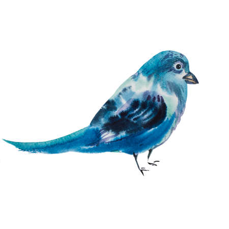 bluebird: Watercolor illustration of a blue jay bird. Little blue bird isolated on white background. Realistic bluebird. Flora and fauna concept. Add your text. Hand drawn picture. Beautiful songbird