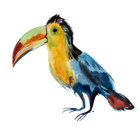 flora fauna: Watercolor toucan bird. Exotic bird isolated on white background. Realistic bluebird. Flora and fauna concept. Add your text. Hand drawn picture. Beautiful wild random bird. Brazil fauna