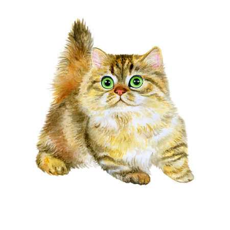 napoleon: Watercolor portrait of Minuet or napoleon cute kitten isolated on white background. Hand drawn detailed sweet home pet. Bright colors, realistic look. Greeting card design. Clip art. Add your text Stock Photo