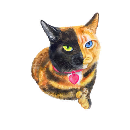 prionailurus: Watercolor portrait of bifacial, two-faced cat isolated on white background. Hand drawn detailed sweet home pet. Bright colors, realistic look. Greeting card design. Clip art. Add your text