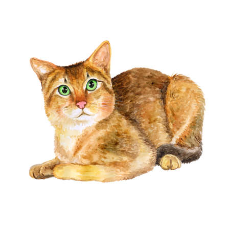 Aquarel portret van zeldzame exotische Chausie jungle kat die op een witte achtergrond. Hand getrokken gedetailleerd huis huisdier zoet. Heldere kleuren, realistische look. Wenskaart design. Clip art. Voeg uw tekst