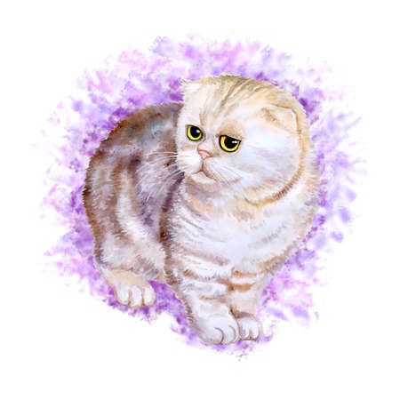 exotic pet: Watercolor portrait of rare exotic Flappig toy-fold cat isolated on violet background. Hand drawn detailed sweet home pet. Bright colors, realistic look. Greeting card design. Clip art. Add your text Stock Photo