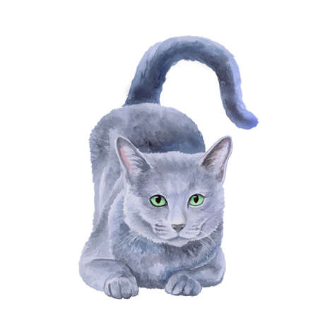 longhaired: Watercolor portrait of rare exotic Nebelung cat, Longhaired Russian Blue isolated on white background. Hand drawn detailed sweet home pet. Bright colors, realistic look. Greeting card design. Clip art