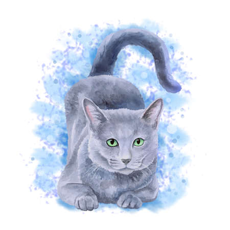 longhaired: Watercolor portrait of rare exotic Nebelung cat, Longhaired Russian Blue isolated on blue background. Hand drawn detailed sweet home pet. Bright colors, realistic look. Greeting card design. Clip art