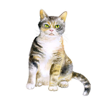 wirehair: Watercolor portrait of rare exotic American wirehair cat isolated on white background. Hand drawn detailed sweet home pet. Bright colors, realistic look. Greeting card design. Clip art. Add your text Stock Photo