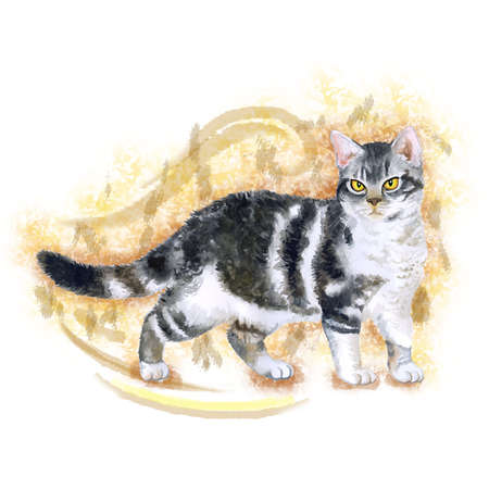 wirehair: Watercolor portrait of rare exotic American wirehair cat isolated on beige background. Hand drawn detailed sweet home pet. Bright colors, realistic look. Greeting card design. Clip art. Add your text