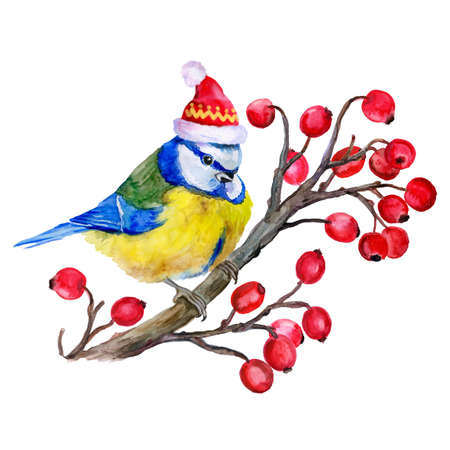 clause: Watercolor titmouse  on the branch of  guelder-rose in a Santa Clause hat  on white background. Illustration