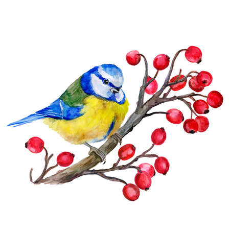 tit: Titmouse on a branch. Birds background.  Decoration with wild winter bird. Watercolor hand drawn illustration. Tit on the viburnum. T-shirt graphics.  For fashion print, poster, textile. Greeting card