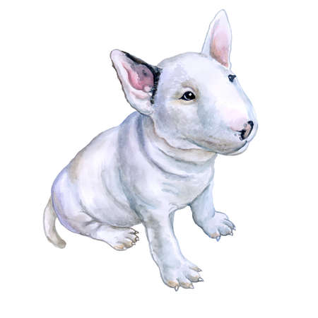 Watercolor portrait of white English Bull terrier, the white cavalier breed dog puppy  isolated on white background. Hand drawn sweet pet. Realistic look. Greeting card design. Clip art. Add your text Stock Photo