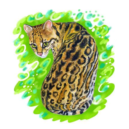Aquarel portret van margay (Leopardus wiedii) met stippen, strepen geïsoleerd op een groene achtergrond. Hand getrokken huis huisdier zoet. Heldere kleuren, realistisch design. Wenskaart design. Clip art. Voeg tekst toe Stockfoto