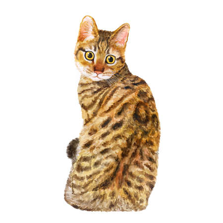 spangled: Watercolor portrait of California Spangled cute cat with dots, stripes isolated on white background. Hand drawn sweet home pet. Bright realistic colors. Greeting card design. Clip art. Add your text