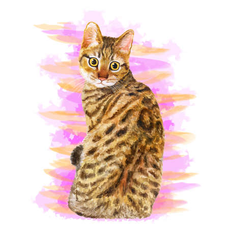 spangled: Watercolor portrait of California Spangled cute cat with dots, stripes isolated on pink background. Hand drawn sweet home pet. Bright realistic colors. Greeting card design. Clip art. Add your text