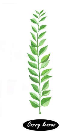 손으로 그린 카레 흰색에 고립 된 분기를 남긴다. 매운 나물. 디자인, 낙서 요리 재료. 양념. 수채화. 카레 나무는 가족 운향과에 아열대 나무에 열