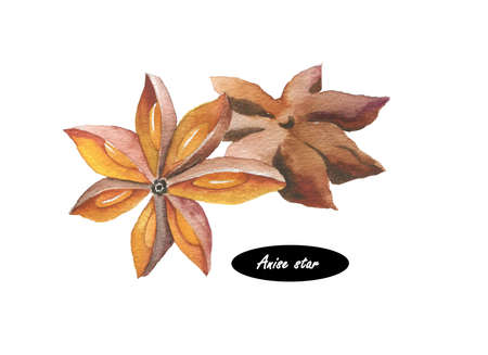 Watercolor anise star illustration isolated on white background. Hand drawn sketch. Series of ingredients for cooking. Herb spices. Aromatherapy. Natural cosmetics. Closeup star anise seeds. Stock Photo