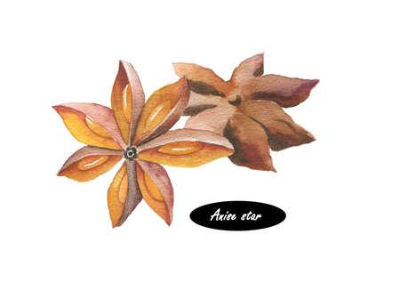 Watercolor anijs ster illustratie op een witte achtergrond. Hand getrokken schets. Aantal ingrediënten voor het koken. Herb kruiden. Aromatherapie. Natuurlijke cosmetica. Close-up van steranijs zaden. Stockfoto