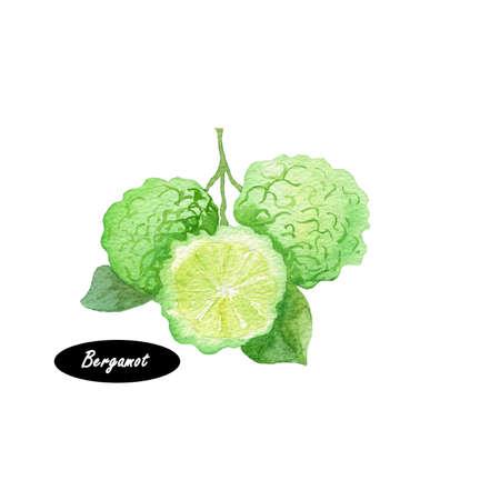 Watercolor Bergamot op tak op een witte achtergrond. Hand getrokken botanische illustratie. Serie van plantaardige ingrediënten. Citrusvrucht. Natuurlijke cosmetica component. Voor afdrukken projecten