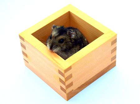 Grey and black hamster. photo