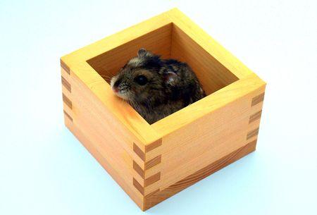 Cute hamster relaxing photo