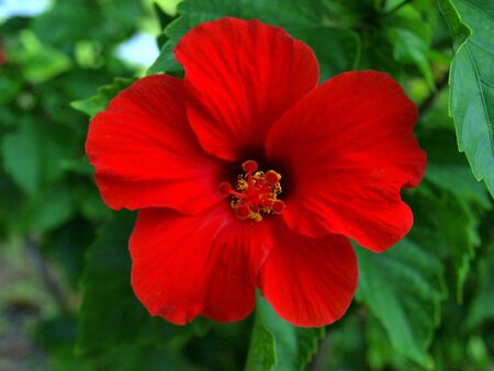 Beautiful red tropical flower stands out from far away. photo