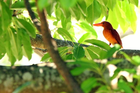 beautiful rare: A very beautiful and rare bird. Stock Photo