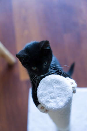 A young kitten climbing into a scratching post