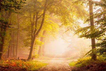 A lovely morning atmosphere in a forest. A fog covered path leading into the unknown.