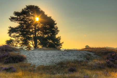 The sun shines through a solitary tree on a field with grass and purple heather. Standard-Bild