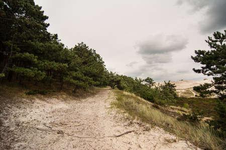 heathland: heathland landscape during a windy stormy day