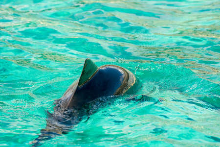 Harbour porpoise in a zoo