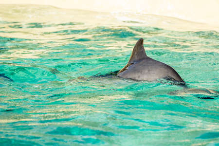 porpoise: Harbour porpoise in a zoo