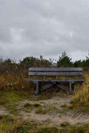 wooden bench in quiet forest photo