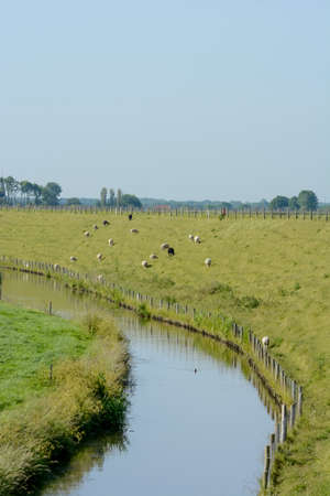 Dutch landscape with dyke and meadow photo