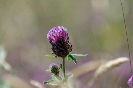 small purple flower: small purple flower in field Stock Photo
