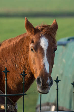 close up of brown horse at a fence photo