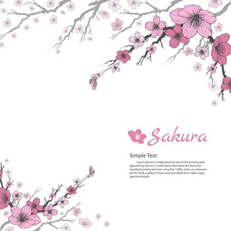 白い背景の上の甘いピンクの花さくら支店。
