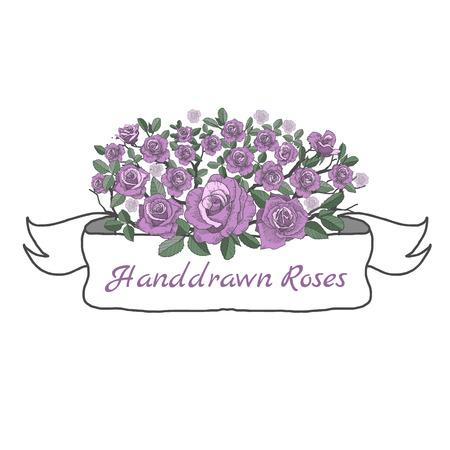 バラの花のリボン。図面と白い背景の上のスケッチ。  イラスト・ベクター素材