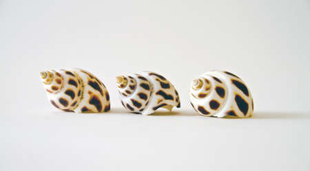 Tree shells in row