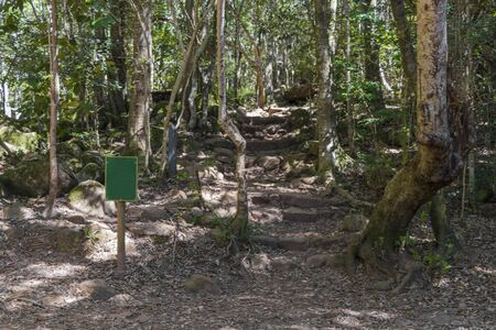 Shady forest path and hiking trail in Table Mountain National Park in Cape Town, South Africa.
