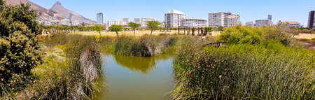 Green Point Park, mountain and pond panorama, beautiful nature in Cape Town, South Africa.
