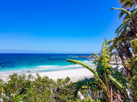 Camps Bay Beach behind palm trees in Cape Town. 免版税图像