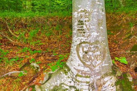 Heart carved into a tree trunk of Plitvice Lakes National Park Croatia.