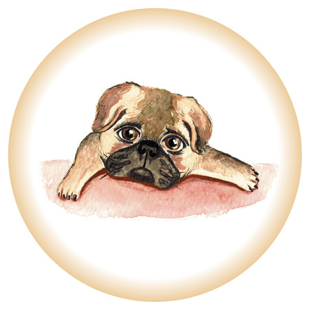 Pug dog. Watercolor painting. Can be used for postcards, prints and design Stock Photo