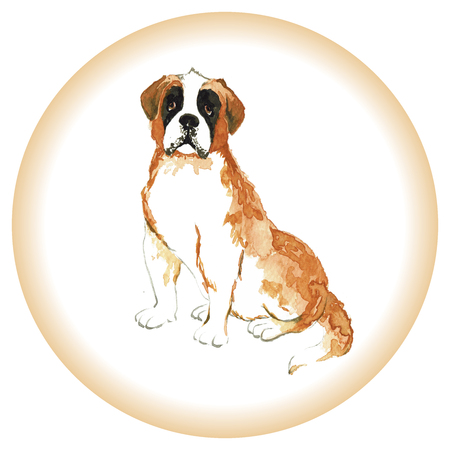 st bernard: Watercolor portrait of Swiss Alpine mastiff red St Bernard breed dog isolated on white background.