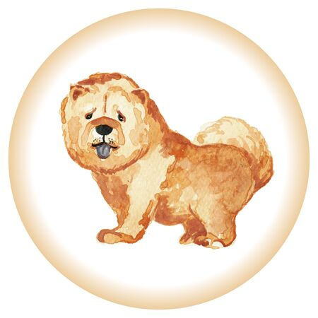 chow: Illustration of the dog breed Chow Chow