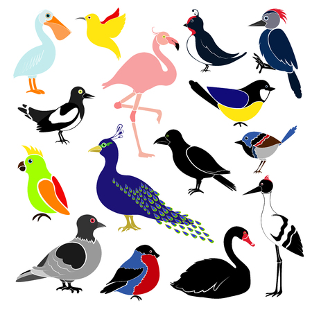 Different birds. Hummingbird, colibri,  titmouse, bullfinch, parrot, pelican, flamingo, woodpecker, swan, magpie, swallow, crows, cranes, peacock, pigeon.