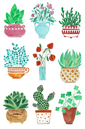 Set of different plants in pots. Flowers in a vase. Watercolor hand drawn illustration.