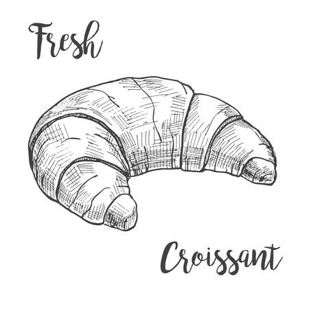 Fresh croissant isolated on white background. Vector illustration of a sketch style.