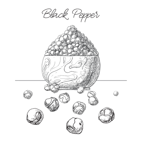 Grains of black pepper in a wooden bowl. Hand drawn black pepper isolated on white background. Vector illustration of a sketch style.
