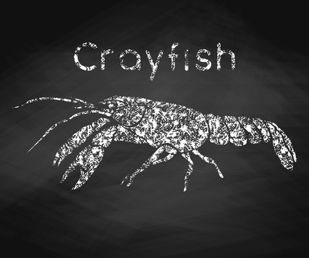 Crayfish drawn in chalk on a chalkboard. Vector illustration.  イラスト・ベクター素材